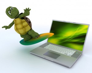 tortoise with surf board and laptop